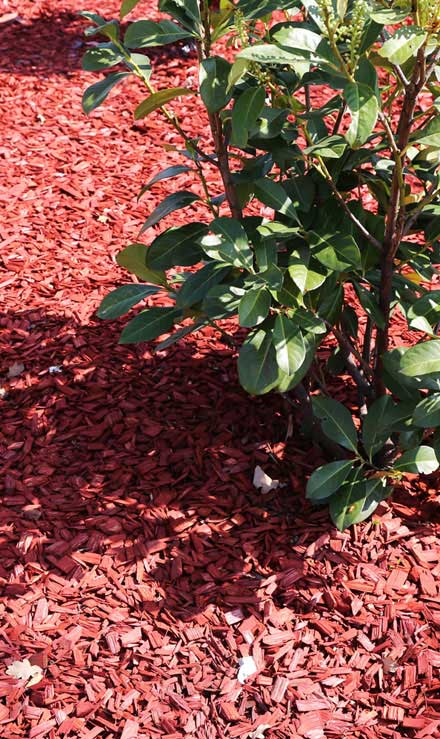 Knights Landscaping Construction And Design Mulching