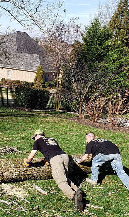 Knights Landscaping Construction And Design Tree Removal